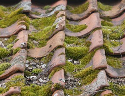 Je dak ontmossen is geen overbodige luxe