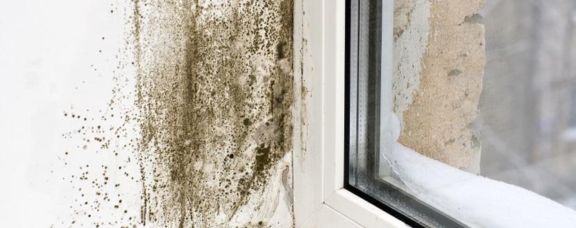 Vochtproblemen huurwoning: condensatievocht