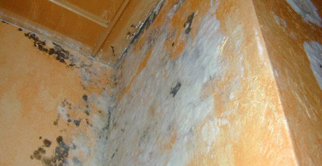 Witte schimmel in huis leidt tot gezondheids en structurele problemen